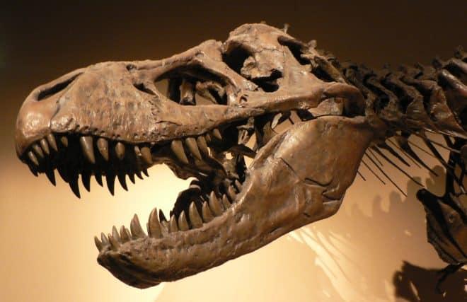 200 scientifiques, 300 années en calcul d'ordinateur et 28 étudesplus tard, la communauté scientifique est unanime, les oiseaux tel que nous les connaissons actuellement sont apparus juste après les dinosaures. Une étude qui vient contredire l'hypothèse qui voulait que les oiseaux étaient apparus en 10 et 80 millions d'années avant les dinosaures. Les oiseaux apparaissent […]