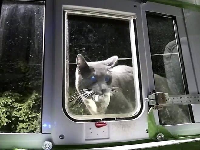 chatière intelligence artificielle