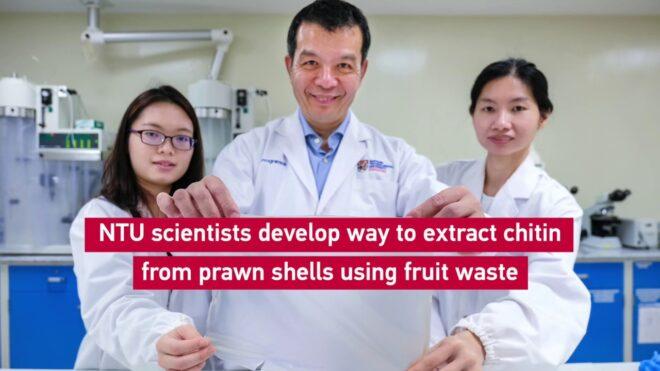 coquillages fruits alternative plastique