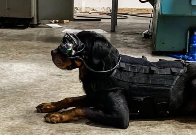 lunettes réalité augmentée chiens armée USA